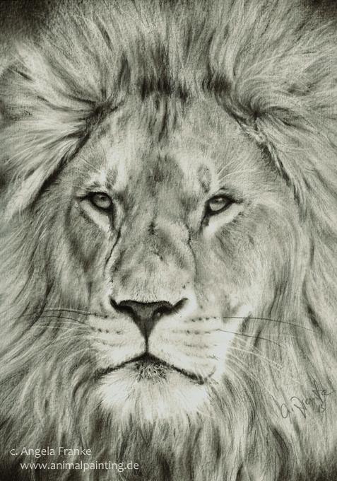 original drawing lion l we zeichnung tier wildlife by. Black Bedroom Furniture Sets. Home Design Ideas